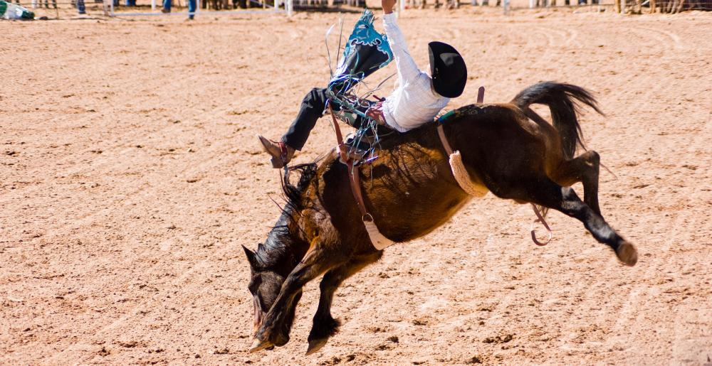 A cowboy in a bareback bronc riding contest