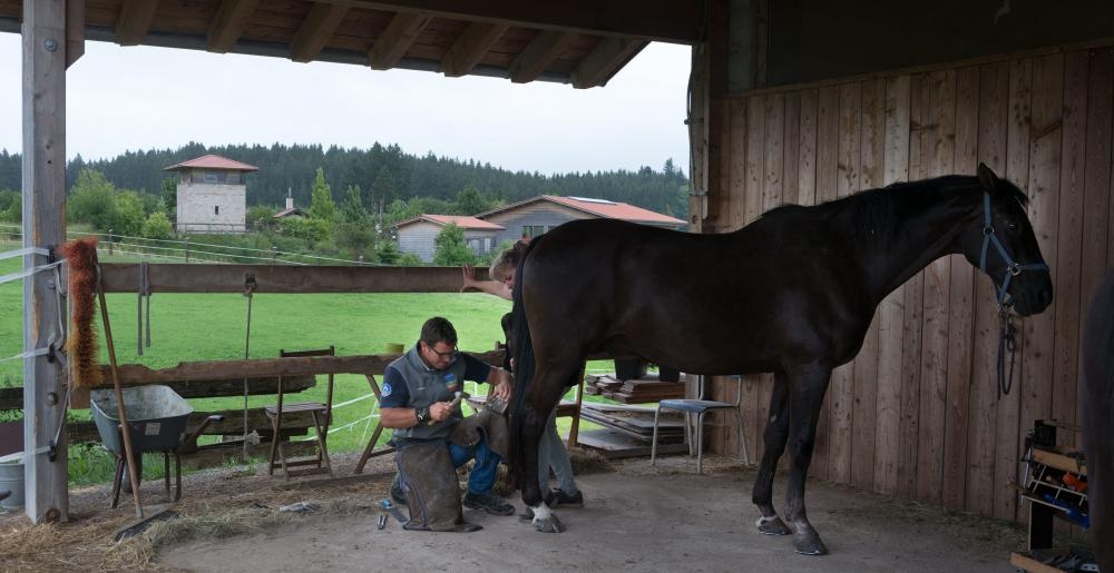 The German farrier Christoph Müller shoeing a horse