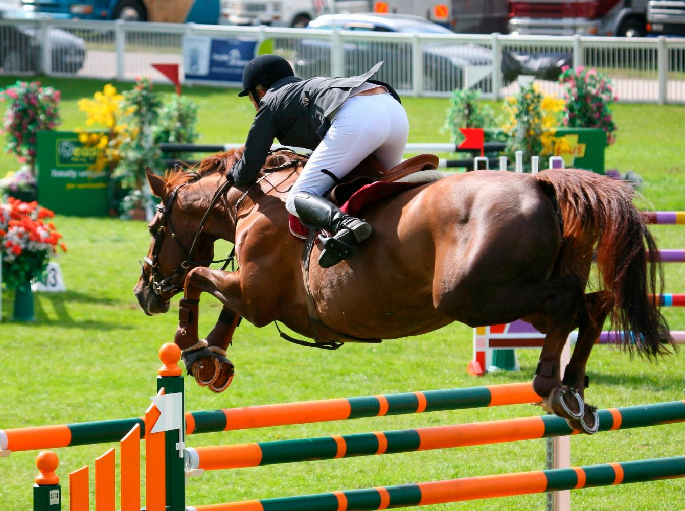 A show jumper in a contest